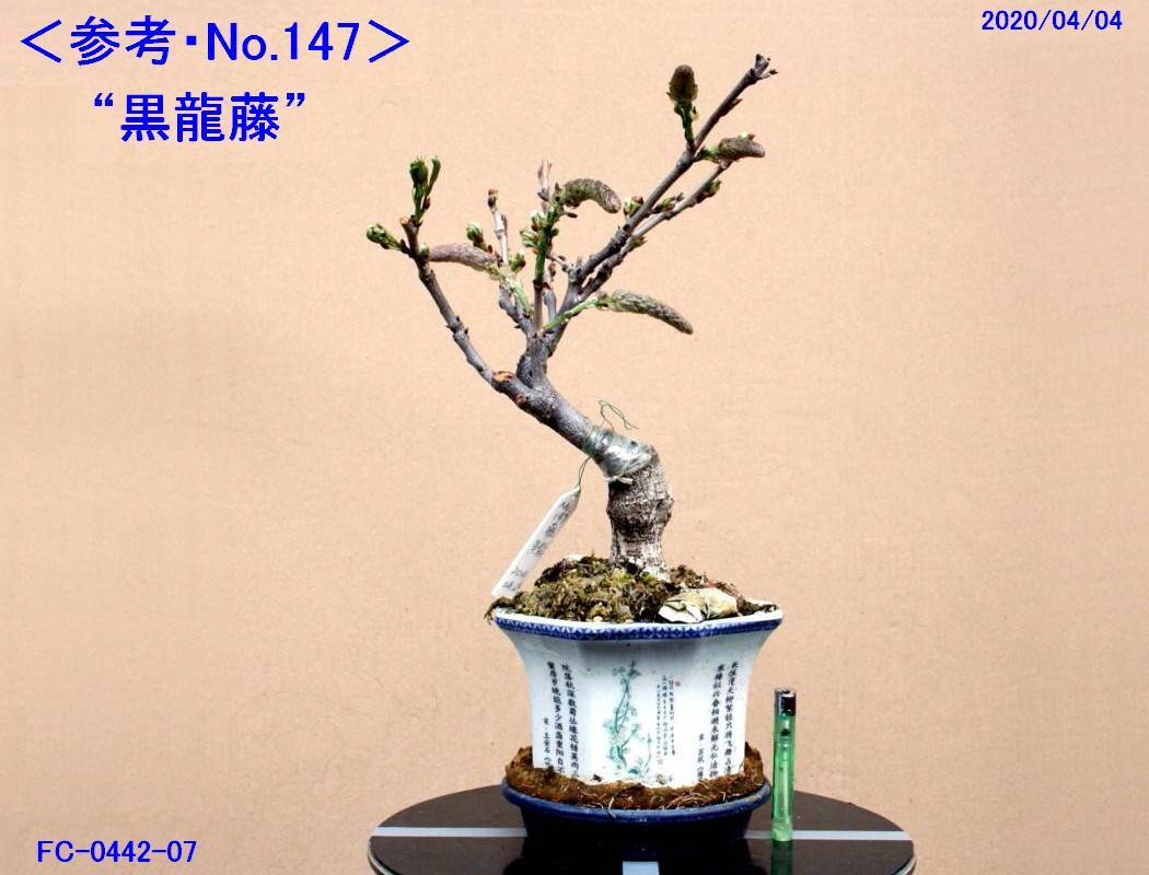 FC0442-07.jpg