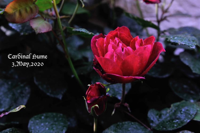 DSC_2099-L_convert_20200507100412.jpg