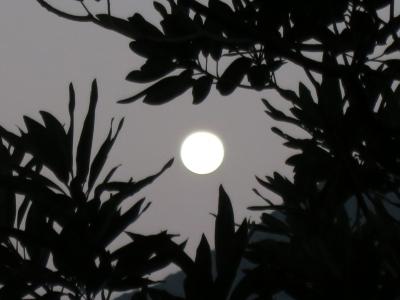 191213-12=朝の満月fm庵裏