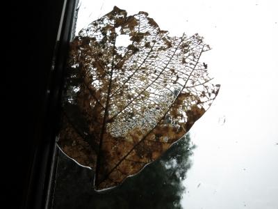 191222-11=大窓にへばり付いた枯葉 aPBR