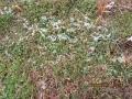 s-草の上に雪あり