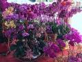 s-海口市の花市場、2