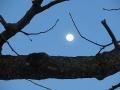 s-27十三夜の月
