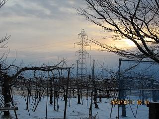 s-211朝のリンゴ園