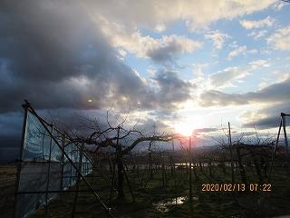 s-213朝のリンゴ園