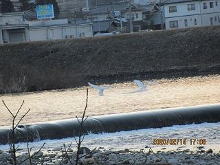 s-214白鳥着水