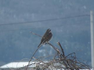 s-218午後の小鳥
