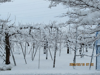 s-218朝の雪