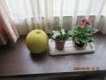 s-228窓辺の花