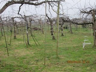 s-園401朝のリンゴ