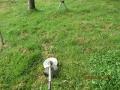 s-402午後の草刈り