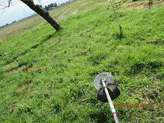 s-草刈り405リンゴ園 - コピー