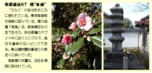 """季節通信67椿""""有楽"""""""