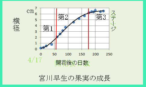 ikedamiya玉伸び
