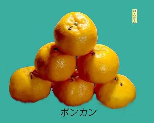 ponkanne果実