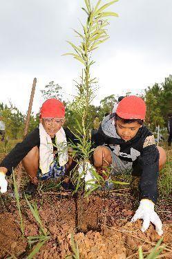 首里城再建への願いを込め、イヌマキの苗を植える児童たち