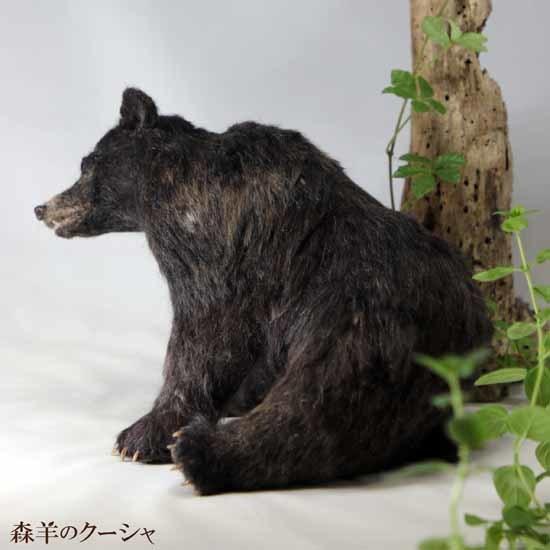ツキノワグマ20200428-3