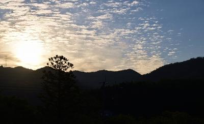 200508朝のお散歩 (2