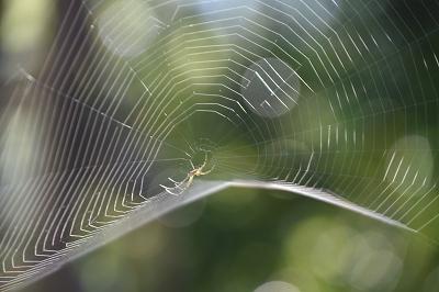 200511蜘蛛の巣