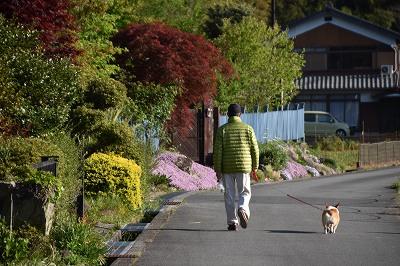 200508朝のお散歩 (1)