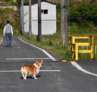 200512お散歩 (1)