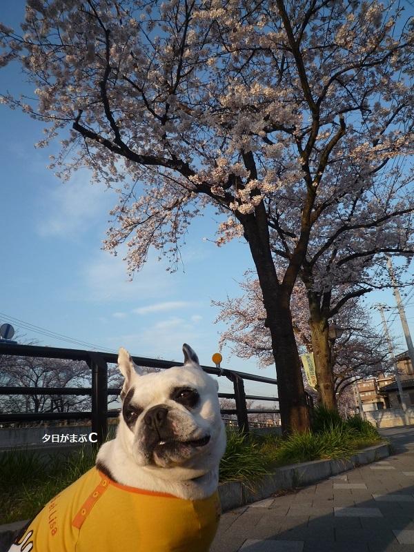 にこら201011to201108 3016