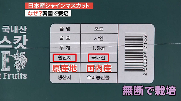 """韓国で日本の高級マスカット""""無断栽培""""…なぜ合法?「日本ブランド」を守れ!"""