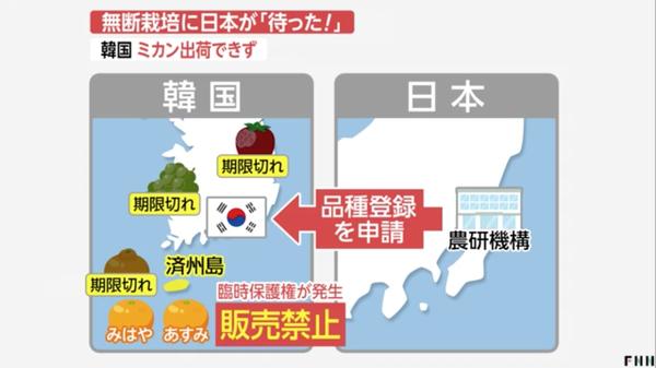 無断栽培に日本が「待った!」 韓国、ミカン出荷できず