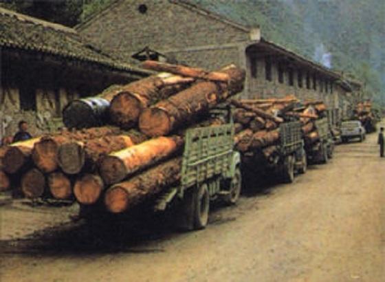 国に向けて運び出されるチベットの材木