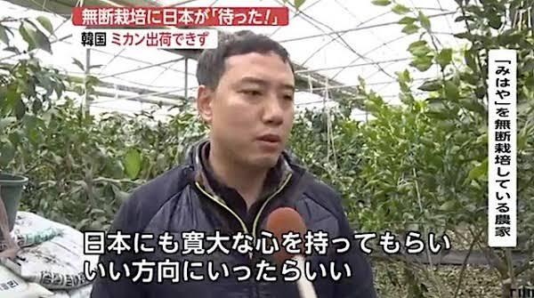 【韓国、今度は勝手に日本のミカン栽培】韓国・済州島で日本のみかんが栽培されている。これに対し、日本側が無断栽培に待ったをかけ、出荷停止に