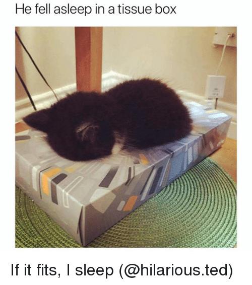 0310he-fell-asleep-in-a-tissue-box