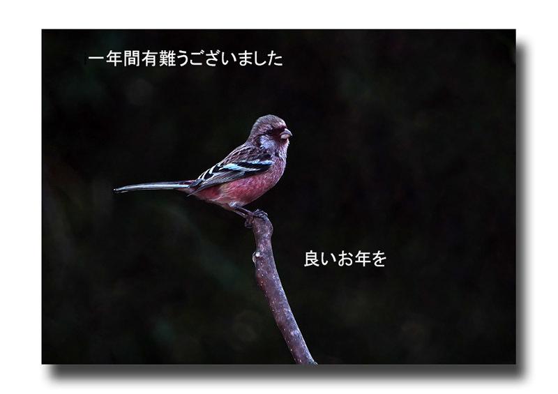 19-12-30-01.jpg
