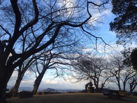 甘樫丘 冬木立