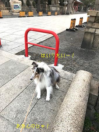 IMG_8685 (1)
