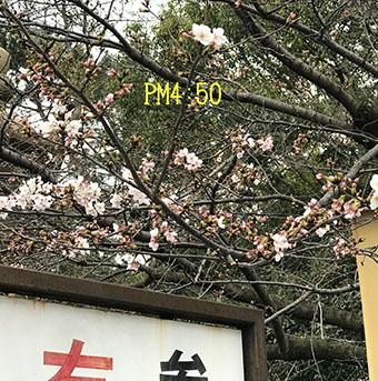 IMG_9558 (1)