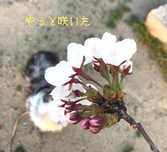 IMG_9594 (1)