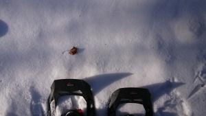 雪の森s (1)