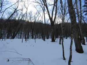 雪の森s (2)