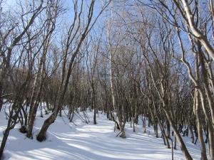 雪の森s (3)