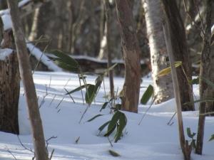 雪の森s (4)