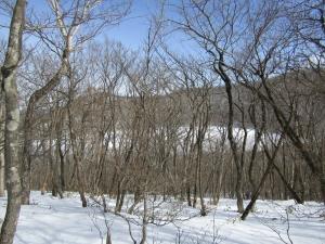 雪の森s (6)
