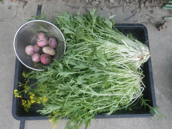 小物野菜3_20_04_05