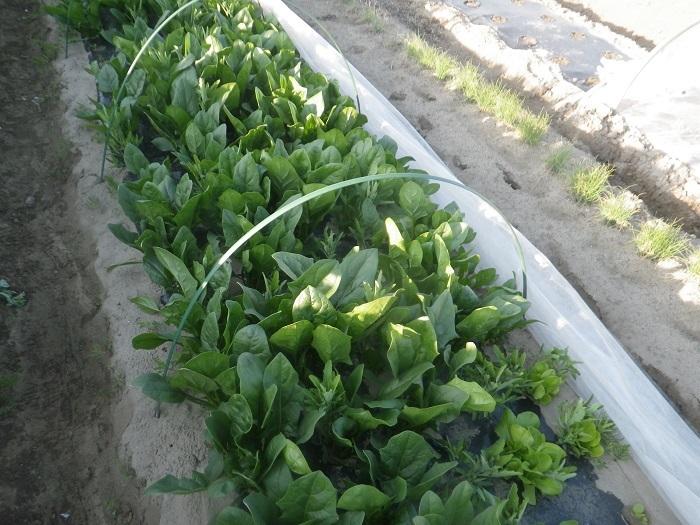 小物野菜2_20_04_11