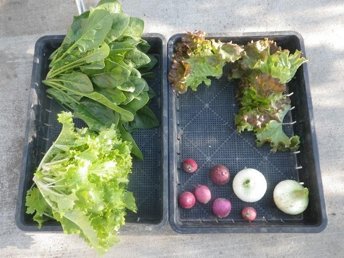 小物野菜4_20_04_11