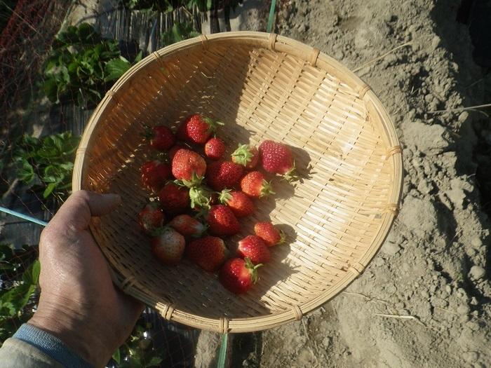 収穫1_20_04_27