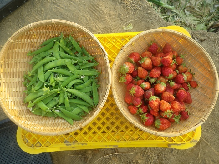収穫3_20_05_02
