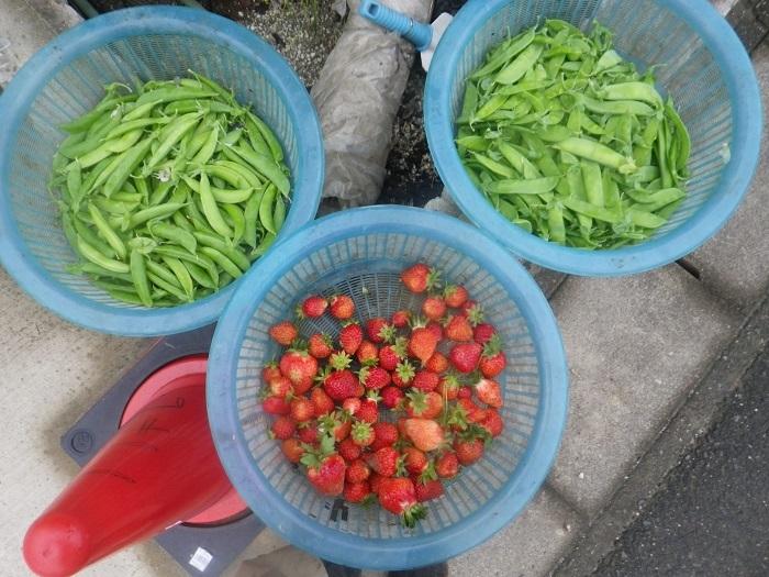 収穫4_20_05_10