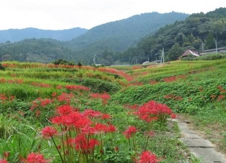 江里田の彼岸花と滝 2019-09-26 040