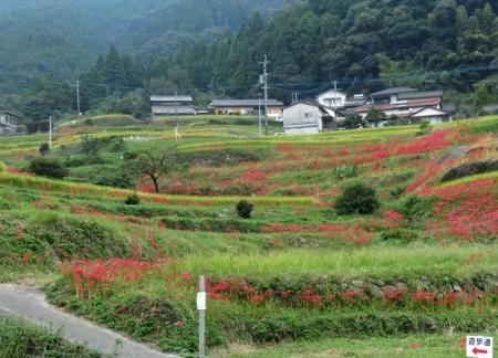 江里田の彼岸花と滝 2019-09-26 035