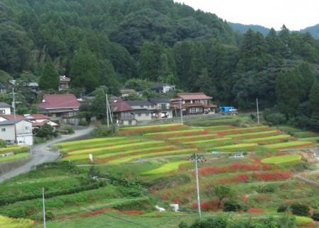 江里田の彼岸花と滝 2019-09-26 099